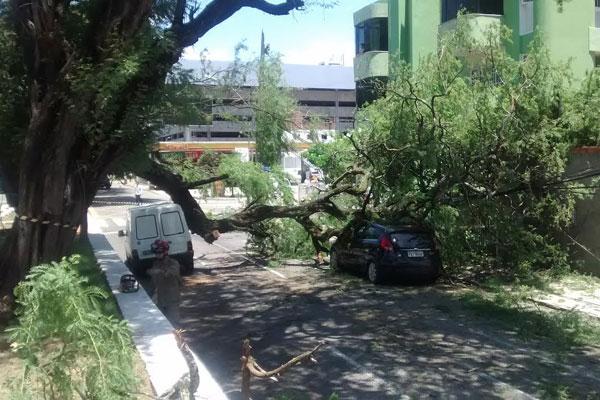 Com a queda de uma árvore, dois carros foram atingidos