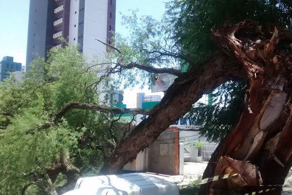 Árvore será retirada por equipe da Prefeitura do Natal