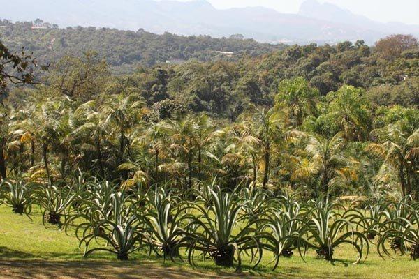 Belo Horizonte, Reúne Centro De Arte Contemporânea E Jardim~ Fotos Jardim Botanico Belo Horizonte