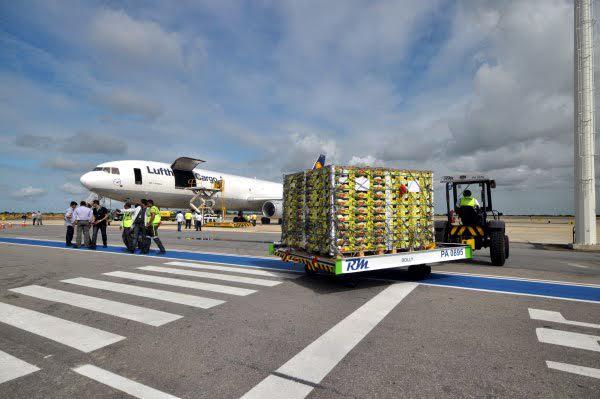 Primeiras 70 toneladas de frutas partiram do Aeroporto de Natal na tarde deste domingo (7) num avião cargueiro. Próximo voo ocorrerá em uma semana