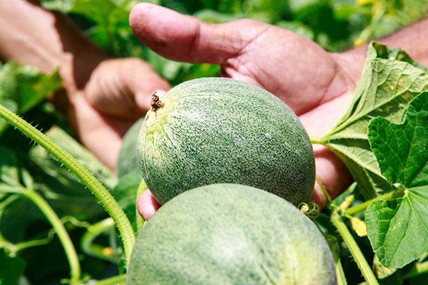 A fruticultura, que lidera a pauta de exportações, será um dos setores-chave em encontro