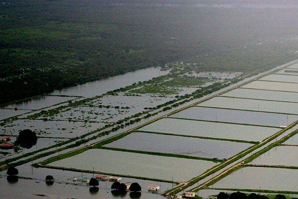 As chuvas que caíram no Rio Grande do Norte em abril de 2008 deixaram rastros de destruição em diversos municípios do RN e atingiram as fazendas de camarão