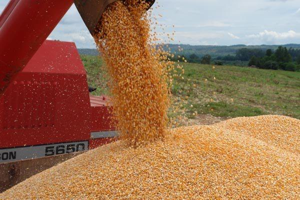 Ganho de produtividade, boas condições de clima e uso de tecnologia favorem a produção do milho