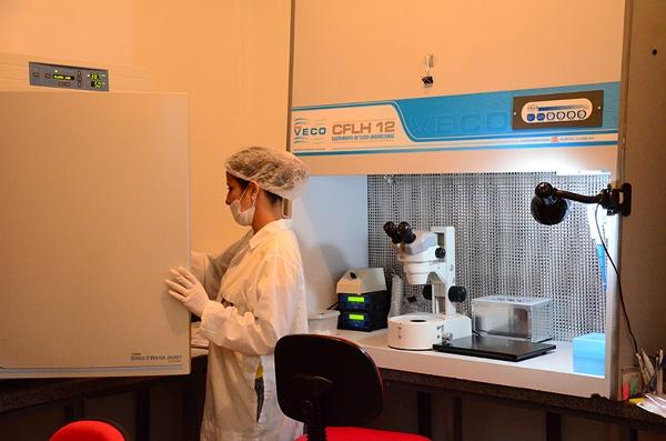 Laboratório, em Natal: O melhoramento genético vai se dar por meio da fertilização in vitro