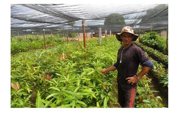 A recuperação de áreas degradadas tem ocorrido com o plantio de mudas frutíferas e nativas