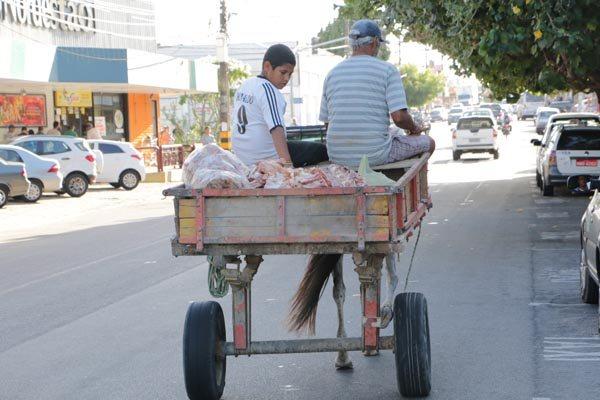 O uso de carroças com tração animal é questionado por entidades de defesa dos animais
