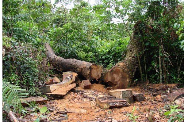 Apesar das medidas  de proteção ambiental adotadas pelo governo federal, desmatamento teve aumento de 16% no Brasil