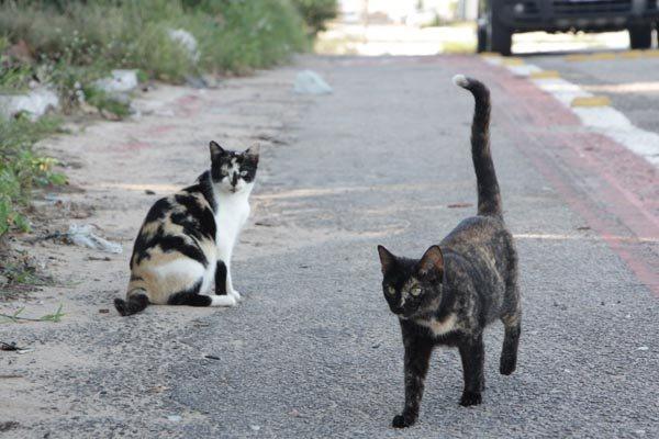 Em um primeiro momento, segundo a Semurb, os 'castramóveis' farão cirurgias em animais que estiverem em situação de rua