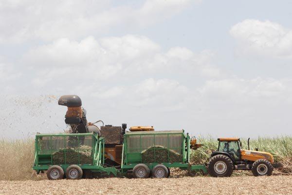 A meta da empresa é saltar das atuais 40 toneladas colhidas em média por hectare para mais de 100