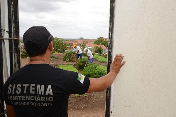 Presos cultivam diversas hortaliças e parte da produção é comercializada. Dinheiro da venda é dividido entre presos e unidade prisional