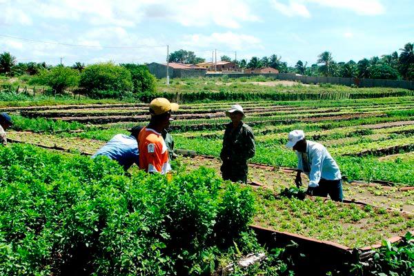 Setor da agropecuária gerou 36.827 novos posto