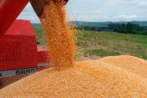 o ano deve ser encerrado com uma safra de grãos de 240,9 milhões de toneladas