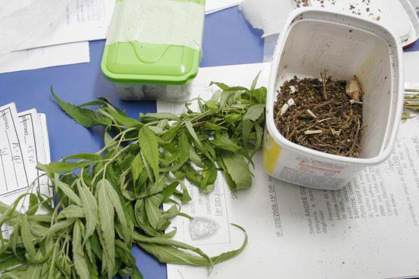 O Fórum Delta 9 fará uma contextualização da Cannabis ao longo da história. Existem evidências, desde o século 19, de que a cannabis tem valor terapêutico