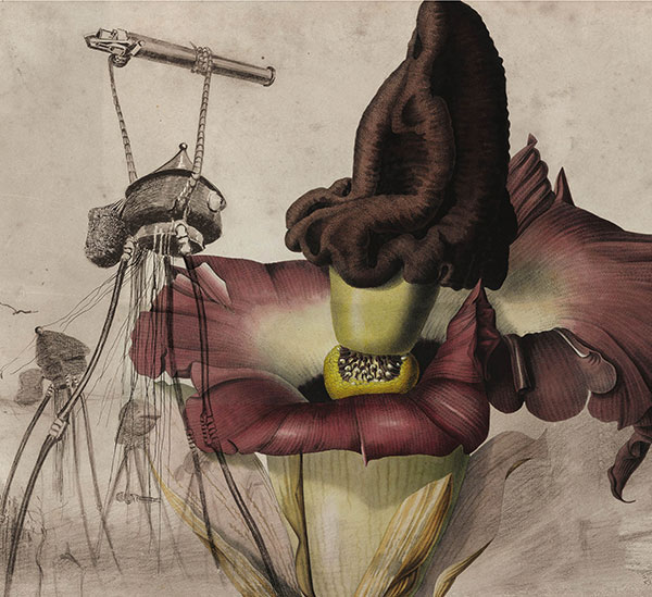 Editado a quatro mãos por Marize Castro e Helton Rubiano, o livro traz ilustrações botânicas sofisticadas de Carl Ludwig Blume