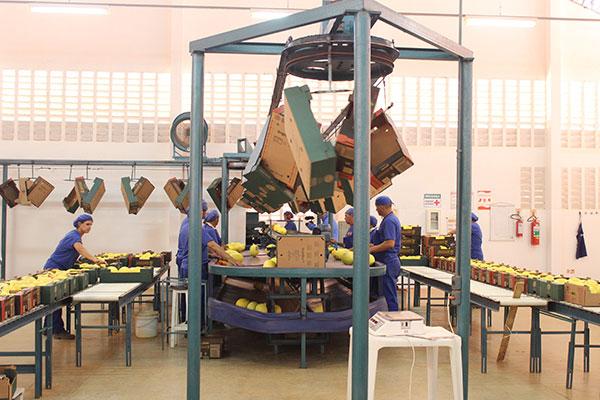 Melão potiguar é exportado para outros estados e para a Europa