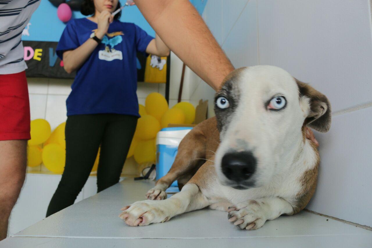 Cães e gatos com mais de três meses devem ser imunizados. Meta da SMS é vacinar 14 mil animais