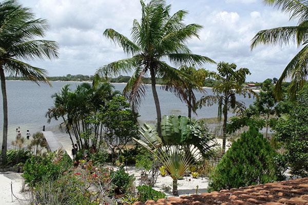 É na Lagoa do Urubu que o cantor Tarcísio Flor cultiva um bosque de árvores frutíferas