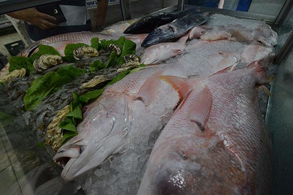 Pescados inteiros estão dispostos em  uma mesa de inox com revestimento interno de poliuretano (que ajuda a conservar o gelo) e coberta de vidro