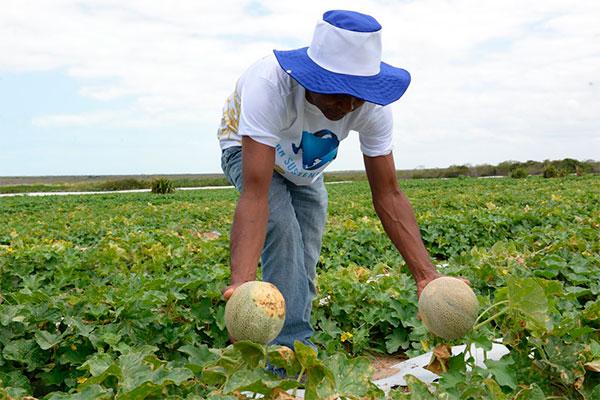 Agricultores terão disponibilidade de contratar mais recursos e comprovar rendas menores