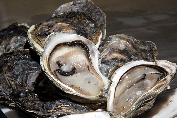 Em território potiguar, Tibau do Sul e Canguaretama são os maiores fornecedores de ostras saudáveis