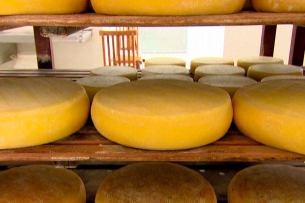 A fabricação de queijos é uma das realidades experimentadas por muitos brasileiros