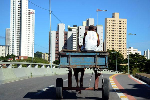 Os cursos são gratuitos e exclusivos para carroceiros e familiares que moram na capital potiguar