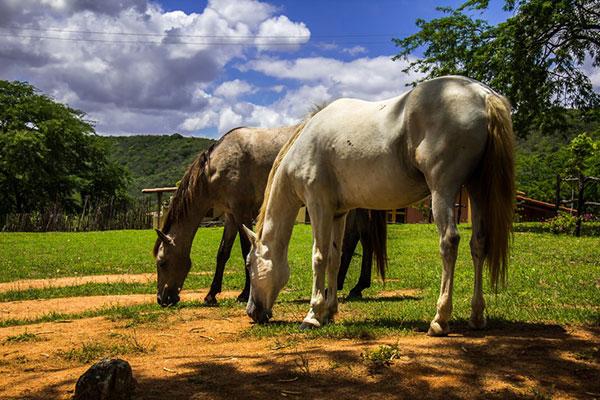 Entre as atividades, o local tem passeio a cavalo