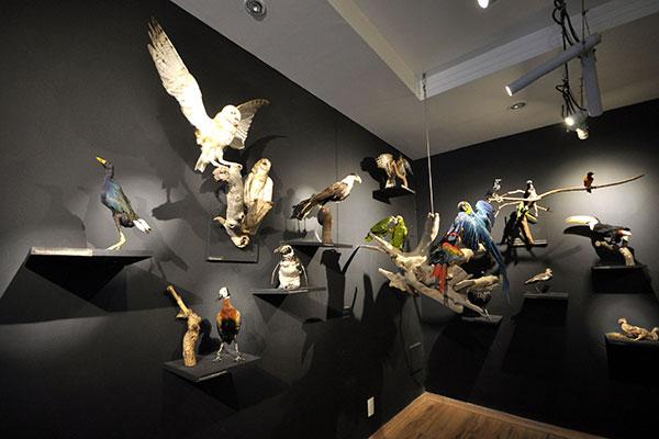 """""""Aves e Evoluções – Uma perspectiva histórica"""" parte dos estudos de Charles Darwin para falar da evolução das espécies"""