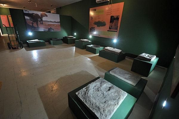 """Vestígios e rastros do passado fazem parte da exposição""""Icnologia – A Vida Passou Por Aqui"""""""