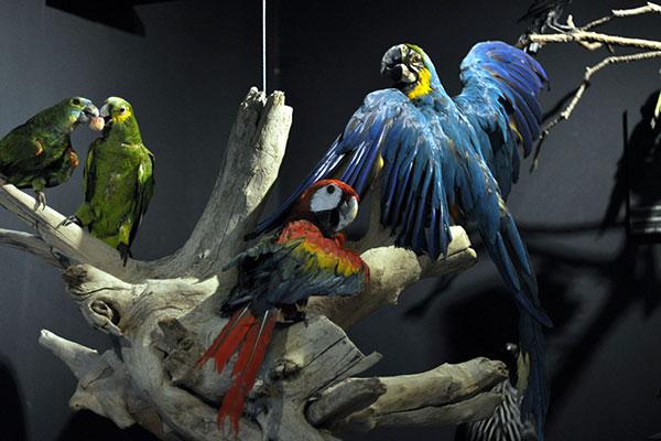Semana de Museus no MCC quer praticar o tema deste ano e levará as exposições para visitação virtual no novo site
