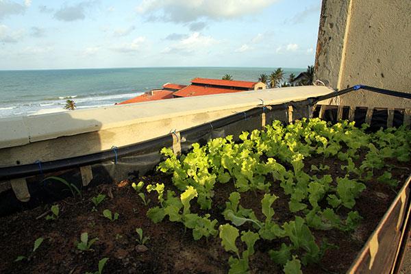 Localizado na Via Costeira, o Hotel Imirá adapta área ociosa no teto de um dos prédios e cria sua horta orgância