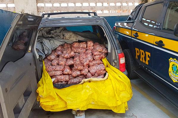 O condutor e o passageiro que transportavam a carga assinaram termo de ocorrência. Eles compraram as aves na Paraíba