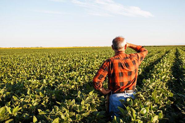 Quem é dono de imóveis e propriedades rurais tem até esta sexta-feira para declarar o Imposto sobre a propriedade Territorial Rural (IRT)