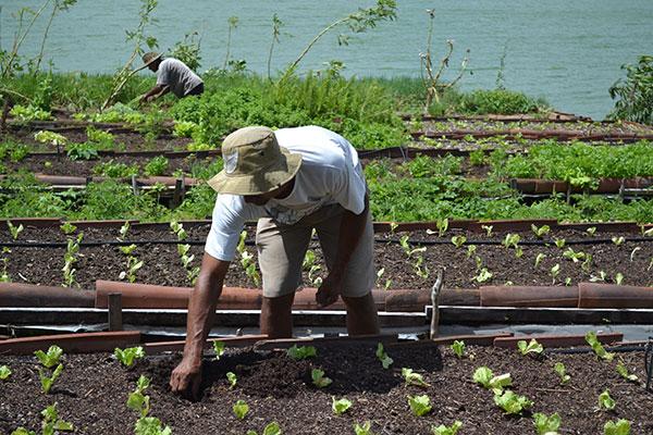 Nordeste foi a região que mais perdeu trabalhadores no campo