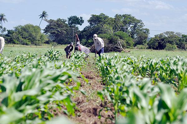Bancos de sementes estão atualmente zerados. Existem espalhados pelo Estado 1.614 bancos de sementes para distribuição