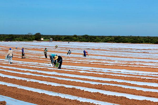 Um dos setores mais impactados com a redução do PIB no mês em referência foi a agricultura