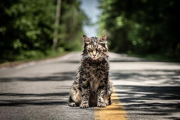 O gato Sumucky na versão 2019 de Cemitério Maldito. O gato morre, é enterrado e retorna