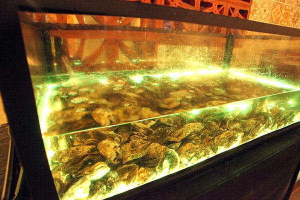 Um aquário de ostras para os fãs da iguaria, que é servida ao natural ou gratinada