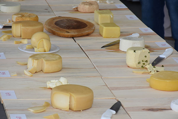 Concurso de queijos foi destaque no Encontro Nordestino de Leite e Derivados. Em setembro, potiguares estarão em Florianópolis