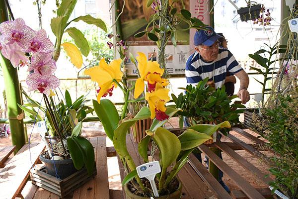 Exposição com mais de 100 espécies de orquídeas atrai natalense