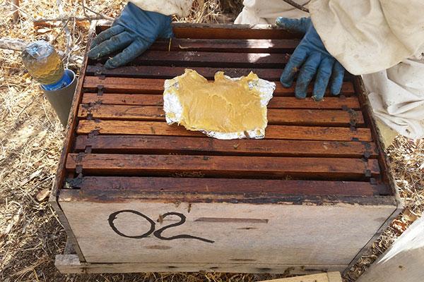 'Bife das abelhas' tem alto grau de aceitação no apiário e sai a baixo custo para os criadores