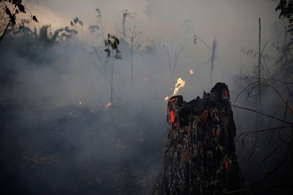 Queimadas na Amazônia estão suspensas por 60 dias