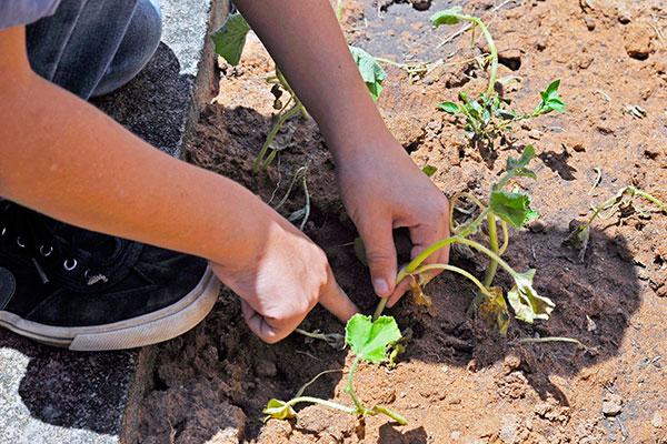 Escola Municipal Pedro Costa, em Maxaranguape, tem horta integrada à rotina dos estudantes