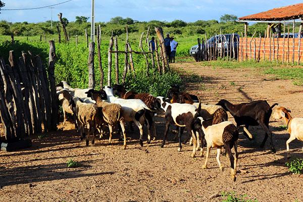 No Rio Grande do Norte, empreendimentos rurais de todos os portes recebem recursos do FNE via contratação de financiamentos