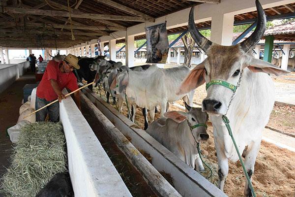 Animais que estarão expostos começaram a chegar ao parque Aristófanes Fernandes, em Parnamirim