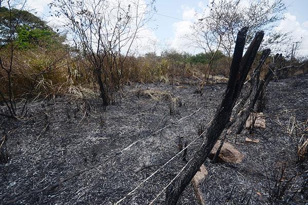 Em Ceará-Mirim, na região metropolitana, o fogo atingiu mata próxima à cidade