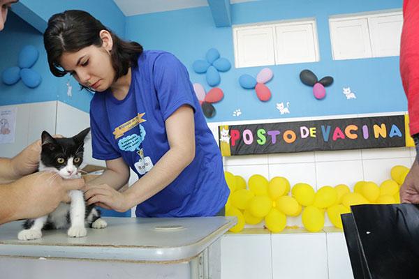 Mais de 22 mil gatos foram vacinados em Natal