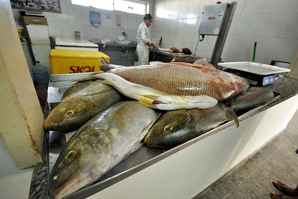 Exames nos pescados estão sendo feitos periodicamente