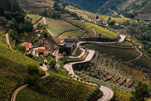 A vinha é a grande protagonista do processo: sob condições favoráveis de solo e de clima expressa o melhor em suas uvas