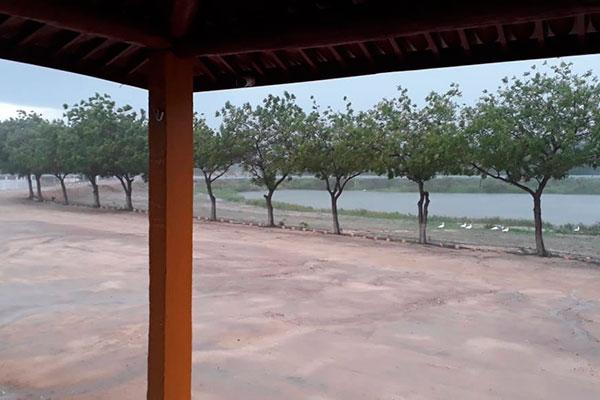 Em alguns municípios, as chuvas favoreceram a retomada das pastagens nativas c